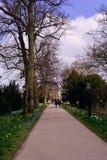 En väg i våren till gammal builing för Cambridge universitet, UK Royaltyfri Foto