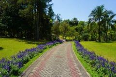 En väg med bana med lavendel på sida med grönt gräs på parkerar med det stora trädet - foto royaltyfri fotografi
