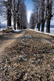 En väg med frost i monferratoen, nordvästliga Italien Royaltyfri Bild