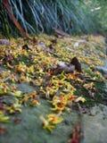 En väg med små blommor Arkivfoto