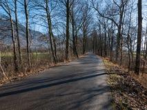 En väg som går till och med en skog i Schweiz Arkivbild