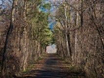 En väg som går till och med en skog i Schweiz Royaltyfria Foton