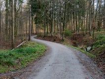 En väg som går till och med en skog i Schweiz Royaltyfri Bild
