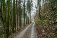 En väg som leder till och med skogen i nedgång Arkivfoton