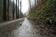En väg som leder till och med skogen i nedgång Royaltyfria Foton