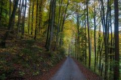 En väg som leder till och med skogen i nedgång Arkivbild