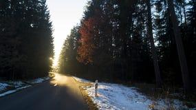 En väg som leder till solnedgången arkivfoton