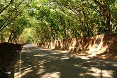 En väg som täckas av rebberträdet Royaltyfri Bild