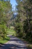 En väg till och med skog Royaltyfri Foto