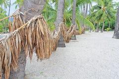 En väg till en strand till och med dungen av palmträd royaltyfri fotografi
