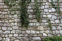 En vägg av den stora vita stenen som växer på murgrönan arkivbild