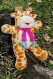 En välfylld giraff Royaltyfria Foton