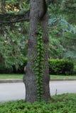 En väva växt på stammen av ett träd bor på en ödla som l royaltyfria bilder