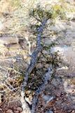 En växt Arkivbilder