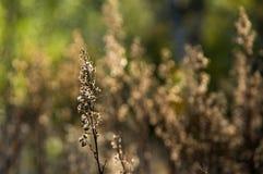 En växt med flovers på en suddig bakgrund Arkivbilder
