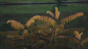 En växt nära sjön stock video