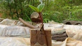 En växt växer orubbligt arkivbild