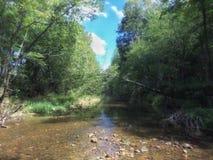 En vår coverred i lövrika gröna träd och växter arkivfoton