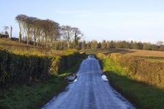 En våt asfaltlandsväg i nordligt - Irland spring in i avståndet och som flankerar på varje sida av klippt hagtorn, slingra sig Royaltyfri Foto