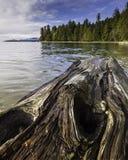 En våt inloggning stranden som leder till den Stanley Park skyddsmuren mot havet i Vancouver, Kanada royaltyfria foton