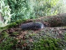 En varelse i trädstam royaltyfri foto