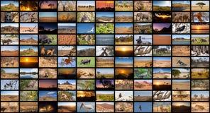 En variation av bilder av afrikanlandskap och djur som en stor bildvägg Arkivfoto