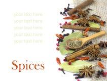 En variation av isolerade kryddor Royaltyfria Bilder