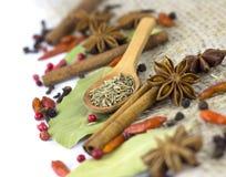 En variation av isolerade kryddor Royaltyfri Fotografi