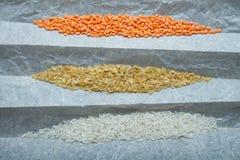 En variation av mat från naturliga organiska korn: ris linser, bulgur vertikalt royaltyfri bild