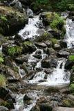 En vattenfall kör i en skog nära La Bourboule (Frankrike) royaltyfri bild