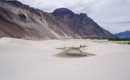 En vattenpöl i mitt av öknen på den Nubra dalen Royaltyfri Foto