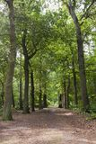 En Vennen de Oisterwijkse Bossen, bosques de Oisterwijk y pantanos fotos de archivo