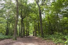 En Vennen de Oisterwijkse Bossen, florestas de Oisterwijk e brejos imagem de stock