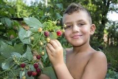 En verano, en el jardín, el muchacho se coloca cerca de un arbusto de ras maduros fotos de archivo libres de regalías