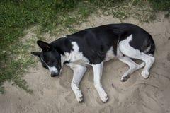 En verano hay un perro enfermo, perdido en la arena Imagen de archivo