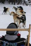 En vertikal bild av en hundsläde i vinter parkerar, Colorado royaltyfri fotografi