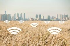 En veteåker på bakgrunden av den moderna staden Digitala teknologier i jordbruk Arkivfoto
