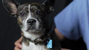 En veterinär som daltar en gullig hund