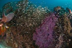 En vibrerande rev mycket av den skinande fisken Arkivfoto