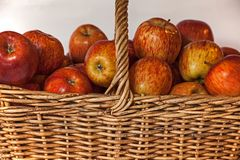 En vide- korg som fylls med röda Starking äpplen 3 royaltyfri foto