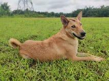 En vila hund royaltyfri fotografi