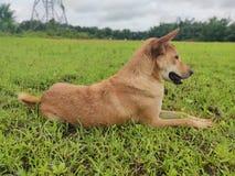 En vila hund royaltyfria foton