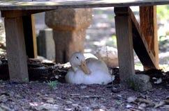 En and vilar på en snut arkivfoto