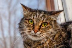 En vild ond katt på fönsterbrädan på gatan Ilsket mi Royaltyfria Bilder