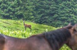En vilken härliga häst: D royaltyfria foton