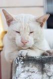 En vilsekommet djurkatt utomhus och att sova på pelaren Fotografering för Bildbyråer