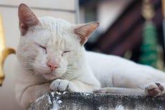 En vilsekommet djurkatt utomhus och att sova på pelaren Arkivfoton