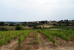 En vingård i byn Royaltyfri Fotografi