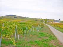 En vingård i falltiden Arkivbild