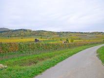 En vingård i falltiden Royaltyfria Bilder